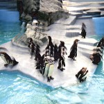 Zoo22PinguinePrs