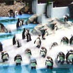 Zoo23PinguinePrs